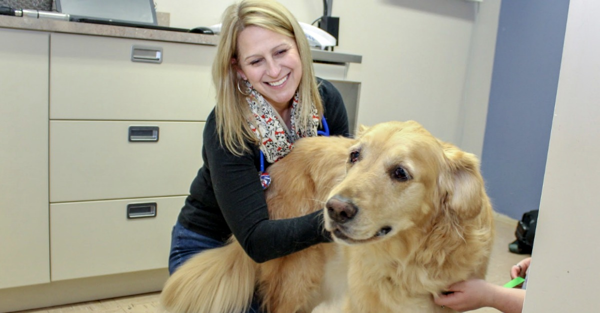 Martin City Animal Hospital owner, Dr. Libby Robertson DVM